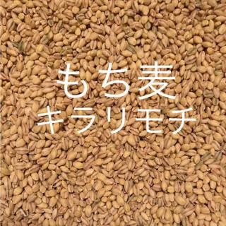 自家製無農薬もち麦❗️キラリモチ ❗️950g❗️(米/穀物)
