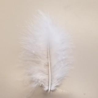 本物の天使の羽