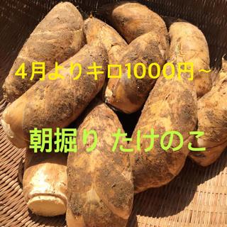 4月1〜発送宮崎県産 朝掘り たけのこ 予約ページ(野菜)