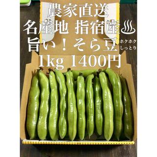 農家直送 指宿産 そら豆 1kg‼️(野菜)