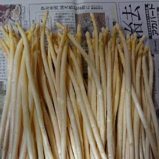 (増量!)佐賀県産極細ホワイトアスパラ1.8キロ(訳あり)(野菜)