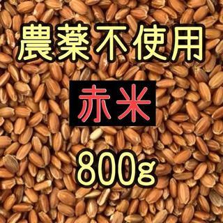 プリン様専用  赤米・黒米・古代米(古代米) 愛媛県産 800g(米/穀物)