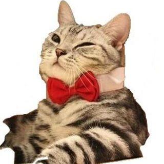 Sサイズ 犬 猫 蝶ネクタイ 赤 フォーマル レッド カラー マジックテープ(猫)
