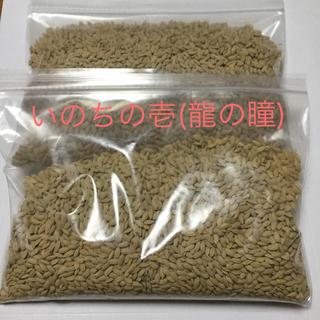 【値下げ】平成30年産 岐阜県産「いのちの壱」水稲うるち籾 種籾 約900g (米/穀物)