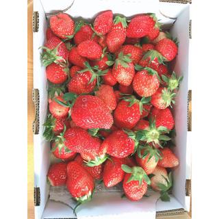 埼玉県産 いちご 1.5キロ規格外品大小バラ詰め 4月から値下げ(フルーツ)
