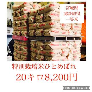新米☆大粒☆特A取得☆宮城県産ひとめぼれ20キロ(米/穀物)