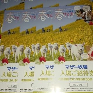 千葉県  マザー牧場入場ご招待券8枚(動物園)