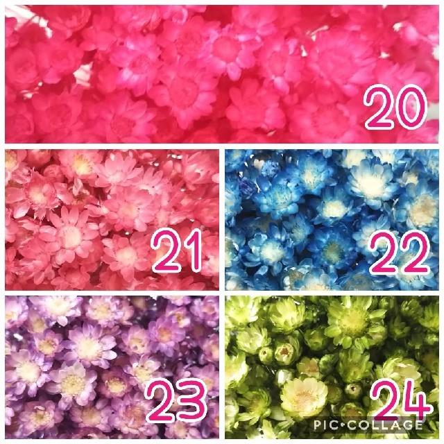 【数量限定】選べるスターフラワーブロッサム24色 ハンドメイドのフラワー/ガーデン(ドライフラワー)の商品写真