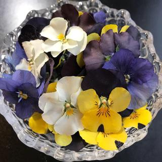 E19☆ビオラ【mix30枚】 花材ドライフラワー(ドライフラワー)