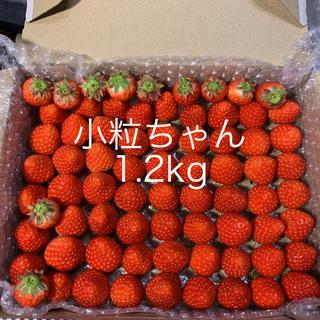 さがほのか苺●小粒ちゃん1.2kg●クール便●いちごイチゴ(フルーツ)