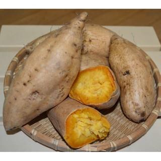 鹿児島県産!マロンゴールドさつまいも 5kg(野菜)