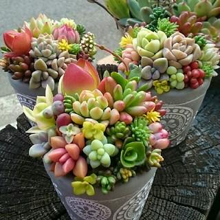 多肉植物の寄せ植え★グレーの鉢.。o○このまま飾れます❗一個1100円です‼(その他)