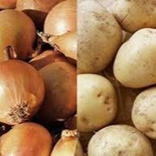 大山山麓無農薬無化学肥料栽培玉葱2.5k ジャガイモ2.5k送料込(野菜)