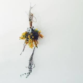 ミモザ ラベンダー テトラゴナのスワッグY(ドライフラワー)