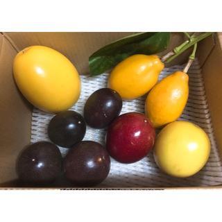 沖縄産イエロー、ルビー、パッシフローラアラタ、パッションフルーツセット5種(フルーツ)