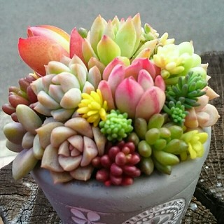 みえっち様専用です❤多肉植物の寄せ植え★グレーの鉢.。o○このまま飾れます❗(その他)