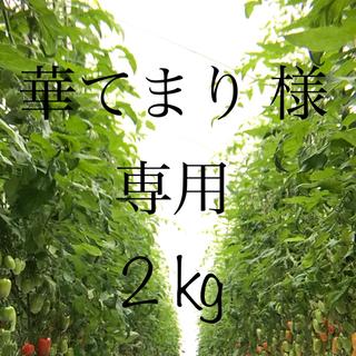 美肌トマト(サンマルツァーノリゼルバ)2kg(野菜)