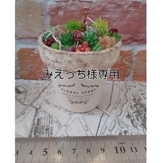 ちまちま多肉カット苗&リメイク鉢(プランター)