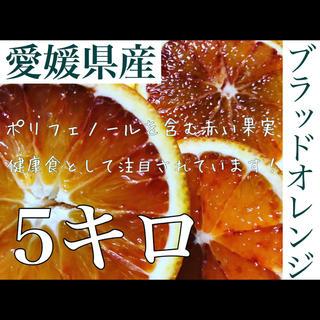 愛媛県産ブラッドオレンジ 5キロ(フルーツ)