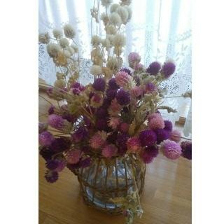 千日紅 ドライフラワー 茎有 白 ピンク 紫 色サイズ取り混ぜ センニチコウ(ドライフラワー)