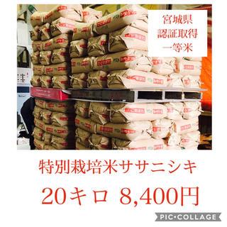 無洗米☆すぅ様専用☆年間契約宮城県産ササニシキ20キロ(米/穀物)