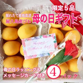 屋久島産 無農薬 びわ 母の日ギフト4パック◆贈答品 フルーツ 採れたて産地直送(フルーツ)