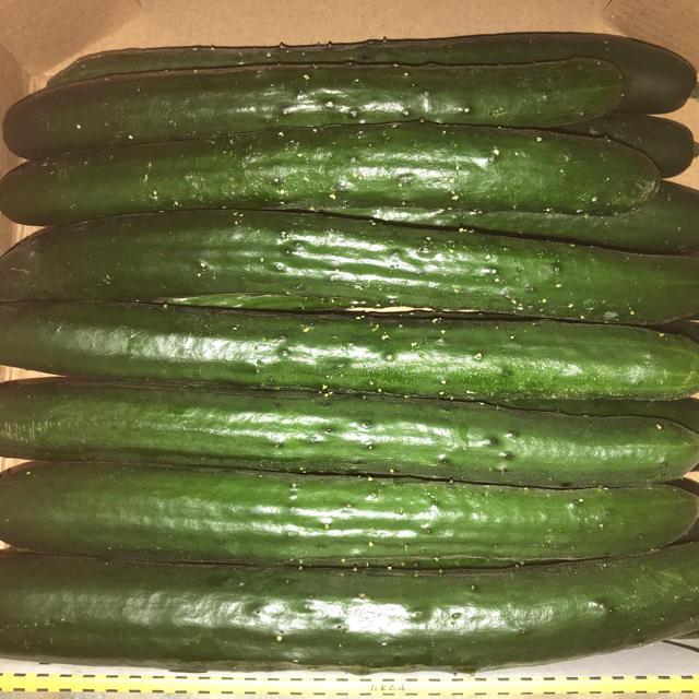 キュウリ15本くらい 食品/飲料/酒の食品(野菜)の商品写真