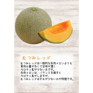 産地直送 茨城県鉾田市産 むつみレッド 3kg 3玉〜4玉  糖度15度 メロン(フルーツ)