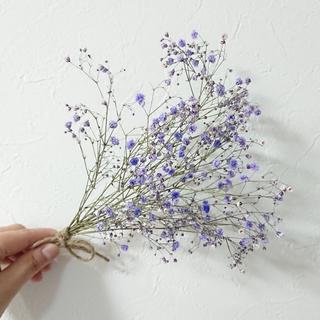 SALE中☆ かすみ草ドライフラワー 紫 【花材】(ドライフラワー)