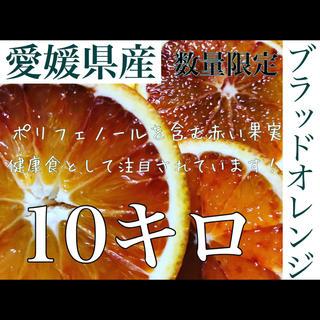 愛媛県産 ブラッドオレンジ 10キロ(フルーツ)