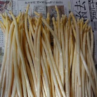 (終了間近!)佐賀県産極細ホワイトアスパラ1.8キロ(訳あり(野菜)