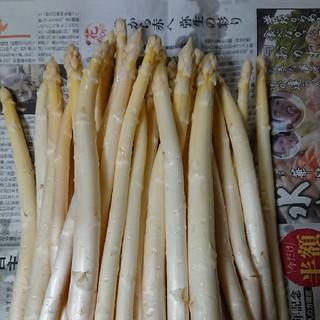 (終了間近!)佐賀県産ホワイトアスパラ1.5キロ(訳あり)(野菜)