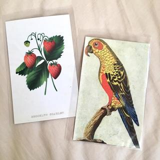 アッシュペーフランス(H.P.FRANCE)のJohn Derian ジョンデリアン ポストカード 2枚セット⑯ いちご(切手/官製はがき)