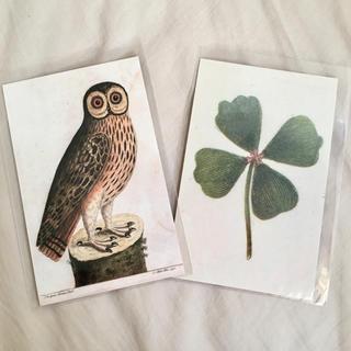 アッシュペーフランス(H.P.FRANCE)のJohn Derian ジョンデリアン ポストカード 2枚セット⑭ クローバー(切手/官製はがき)