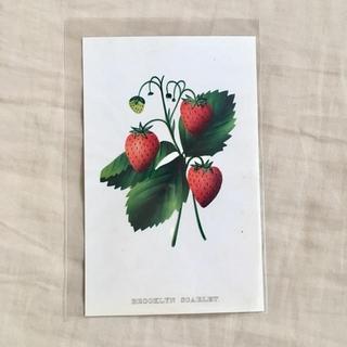 アッシュペーフランス(H.P.FRANCE)のJohn Derian ジョンデリアン ポストカード ⑩ いちご(切手/官製はがき)