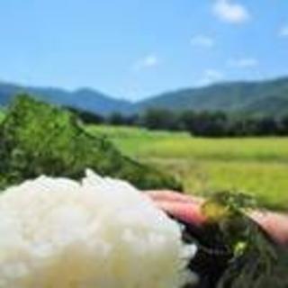 おいしい新米!30年度山口県産コシヒカリ玄米3kg【殺虫殺菌剤不使用米(米/穀物)