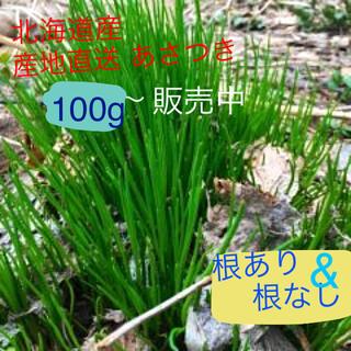 北海道産 あさつき(野菜)