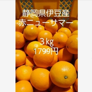 東伊豆産ニューサマーオレンジ 3kg(フルーツ)