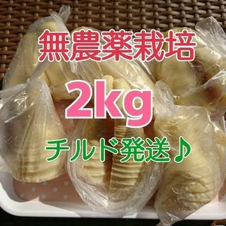 【チルド発送♪】 《無農薬栽培》 和歌山県産 孟宗たけの子 水煮 2kg(野菜)