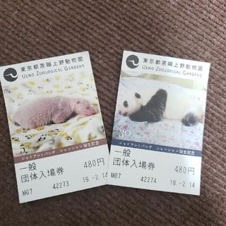 上野動物園 入場券 大人2枚(動物園)