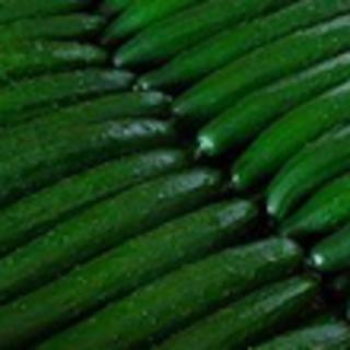 大山山麓無農薬無化学肥料栽培キュウリ1㎏送料込(野菜)
