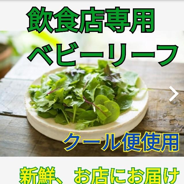 飲食店専用ベビーリーフ 8種類の詰め合わせ 1kg クール便でお届け 食品/飲料/酒の食品(野菜)の商品写真