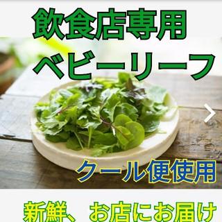 飲食店専用ベビーリーフ 8種類の詰め合わせ 1kg クール便でお届け(野菜)