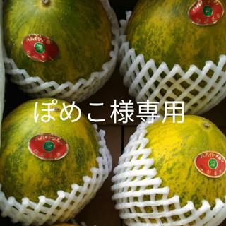 長崎パパイヤメロン赤秀6玉(フルーツ)
