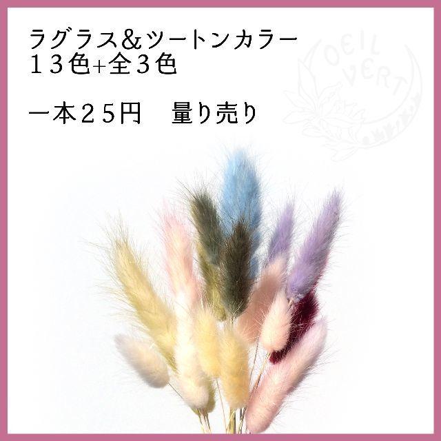【1本25円】ラグラス&ツートンカラー 量り売り ハンドメイドのフラワー/ガーデン(ドライフラワー)の商品写真