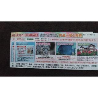 上野動物園 葛西臨海水族館 など ペア(動物園)