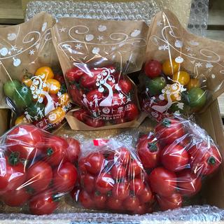 ミニ&フルティカトマトセット1.8kg(野菜)