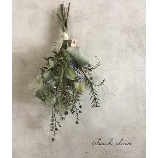 シルバーグリーンが美しい葉物とスターリンジアのシンプルなスワッグ ドライフラワー(ドライフラワー)
