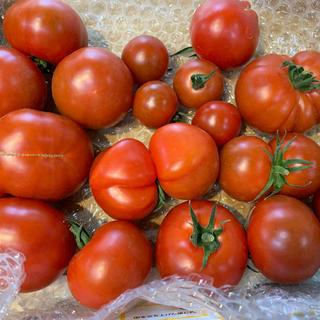 訳ありフルティカトマト1キロ(野菜)