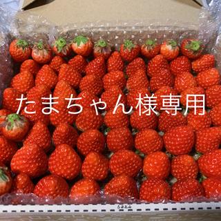 たまちゃん様専用●小粒いちご●2箱(約1.3kg)クール便(フルーツ)
